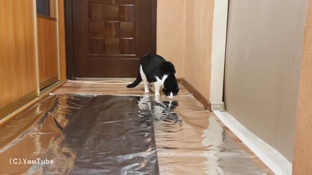 猫が苦手なアルミホイルを廊下に敷き詰めたときの反応を実験してみた結果