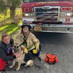 救助隊員も初めて経験した珍しい犬の救出劇
