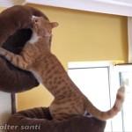 ベッドにこだわりのある猫…柔らかいベッドの作り方を学ぶ